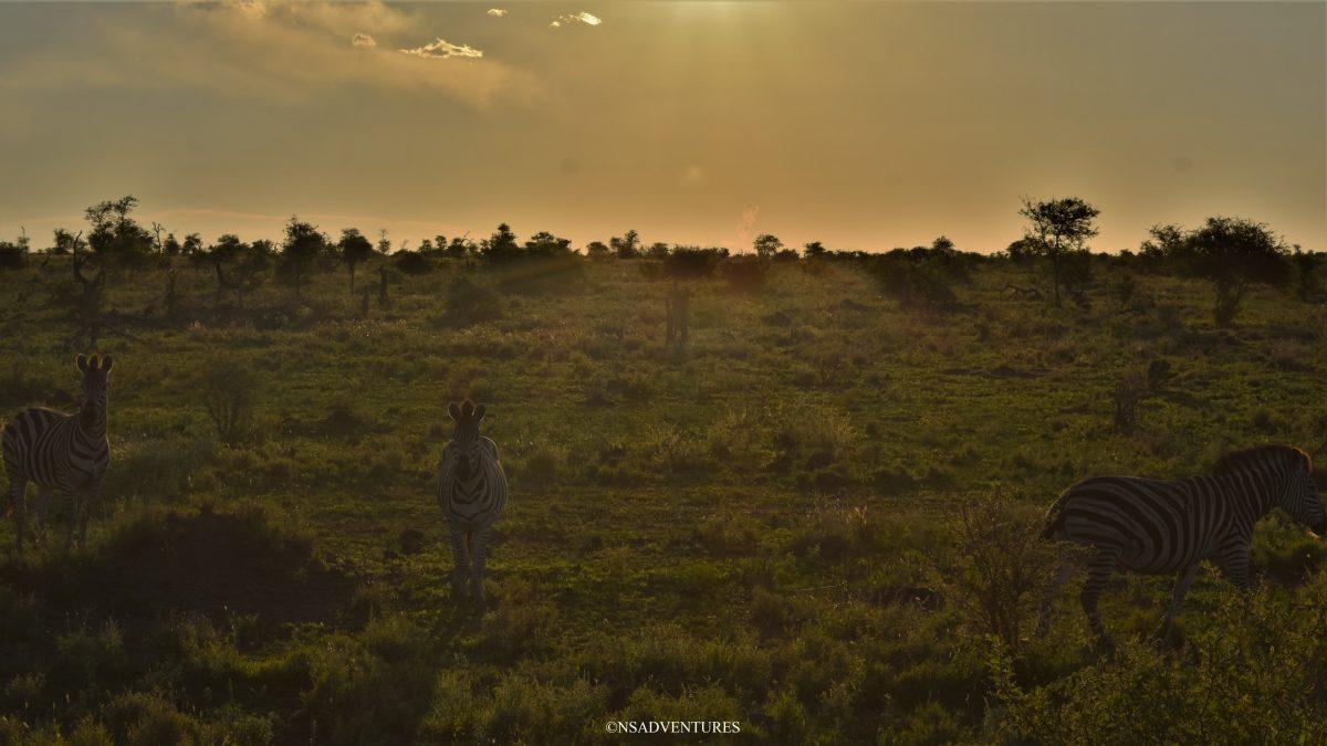 Kruger National Park Guida pratica Safari
